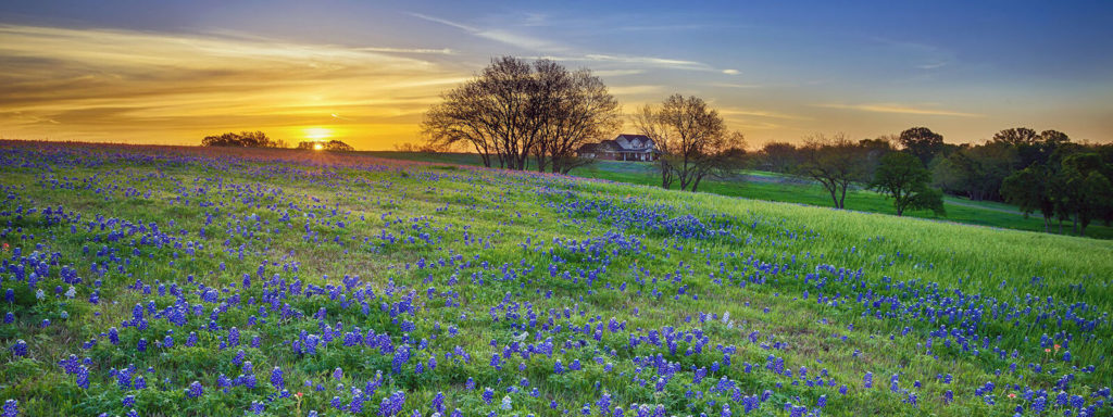 texas service area blue bonnet field